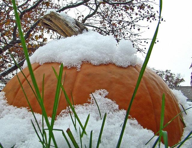 Winter Pumpkin