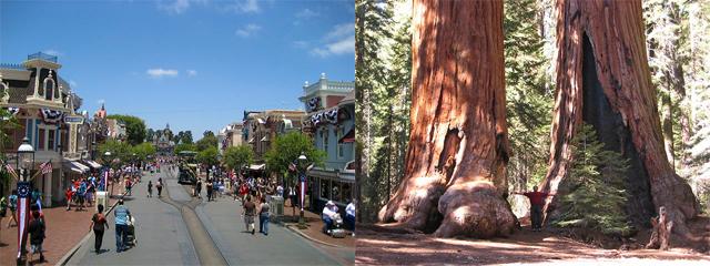 Disneyland Vomit Tree
