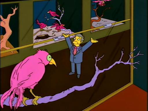 Homer Society Of Natural History